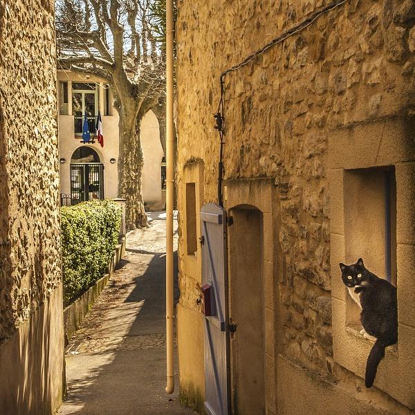 Beaumont de Pertuis, fenêtre au chat